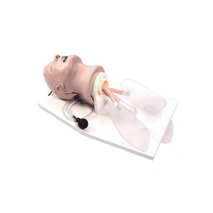 "Tête d'intubation adulte avec support ""Airway Larry"" de Life/form®"